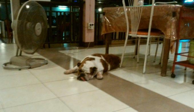 レストランの犬